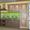 Кухни на заказ от производителя «Студия М-КЛАСС»,  Житомир . #696192