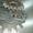 Плазменная резка металла ЧПУ #1277291