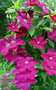 fioricoltura_sv@ukr.net